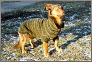 Koirien vaatteet Käpylän eläinkauppa